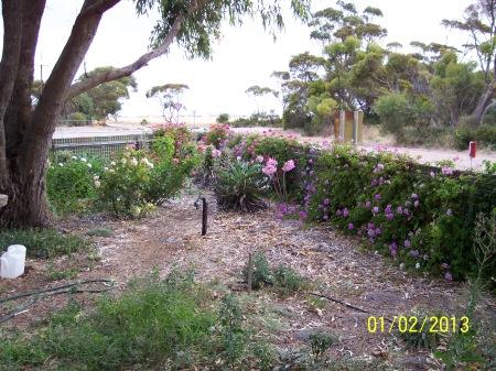 Dry Garden January 2013