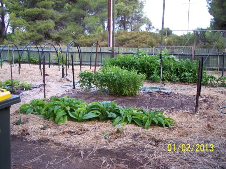Comfrey in front of the seed bed with Bed 3 in the background.