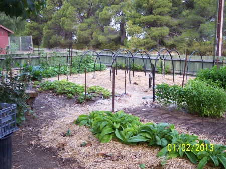 Another view of Bed 2 with the Sweet Potato trellis in Bed 1 visible.