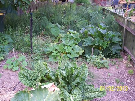 Looking back towards the asparagus bed with early zucchini plant still producing in the background.