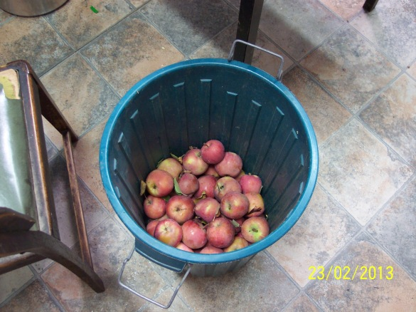 This bin was full to overflowing before I started processing the apples for bottling. Bin holds 46 litres of liquid. It is made of food grade plastic.
