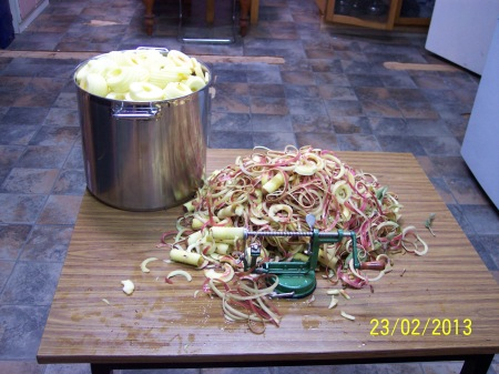 The work table showing my largest stainless steel pan with the red delicous apple peeled and cored. The peels and cores amounted to about 1/3 quantity of the whole fruit.