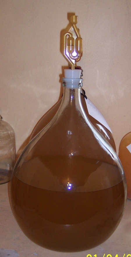 Passionfruit Wine 1004 on 1-4-13 under air lock being monitored to ensure fermentation is finished before bottling.