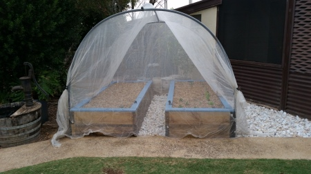 Hot weather continuing so needed to arrange some sort of protection for the seedlings. This is insect proof netting which stops butterflies laying eggs on broccoli etc and also gives 15% protection. This is an interim measure only because it is affected by the wind so will be changed after this heatwave to something more robust.
